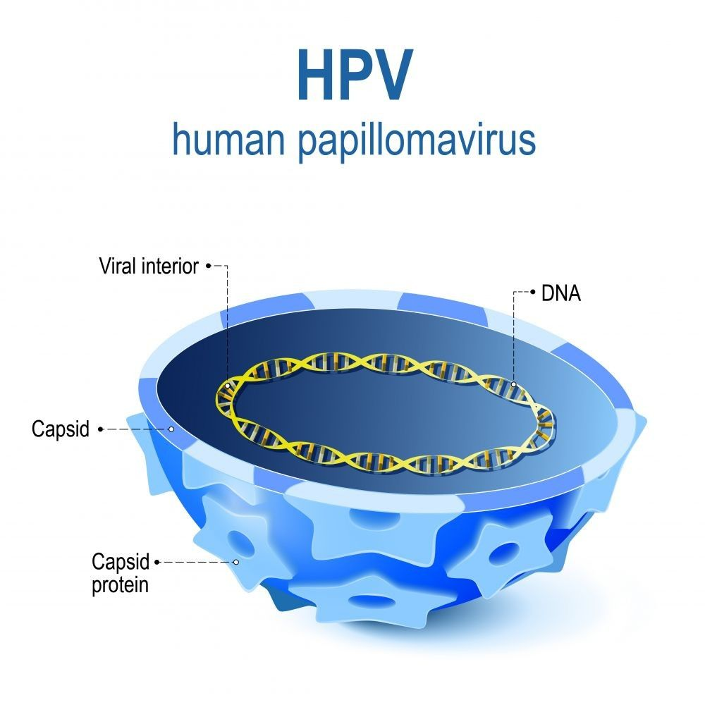 Human papillomavirus infection illustration of Viral interior